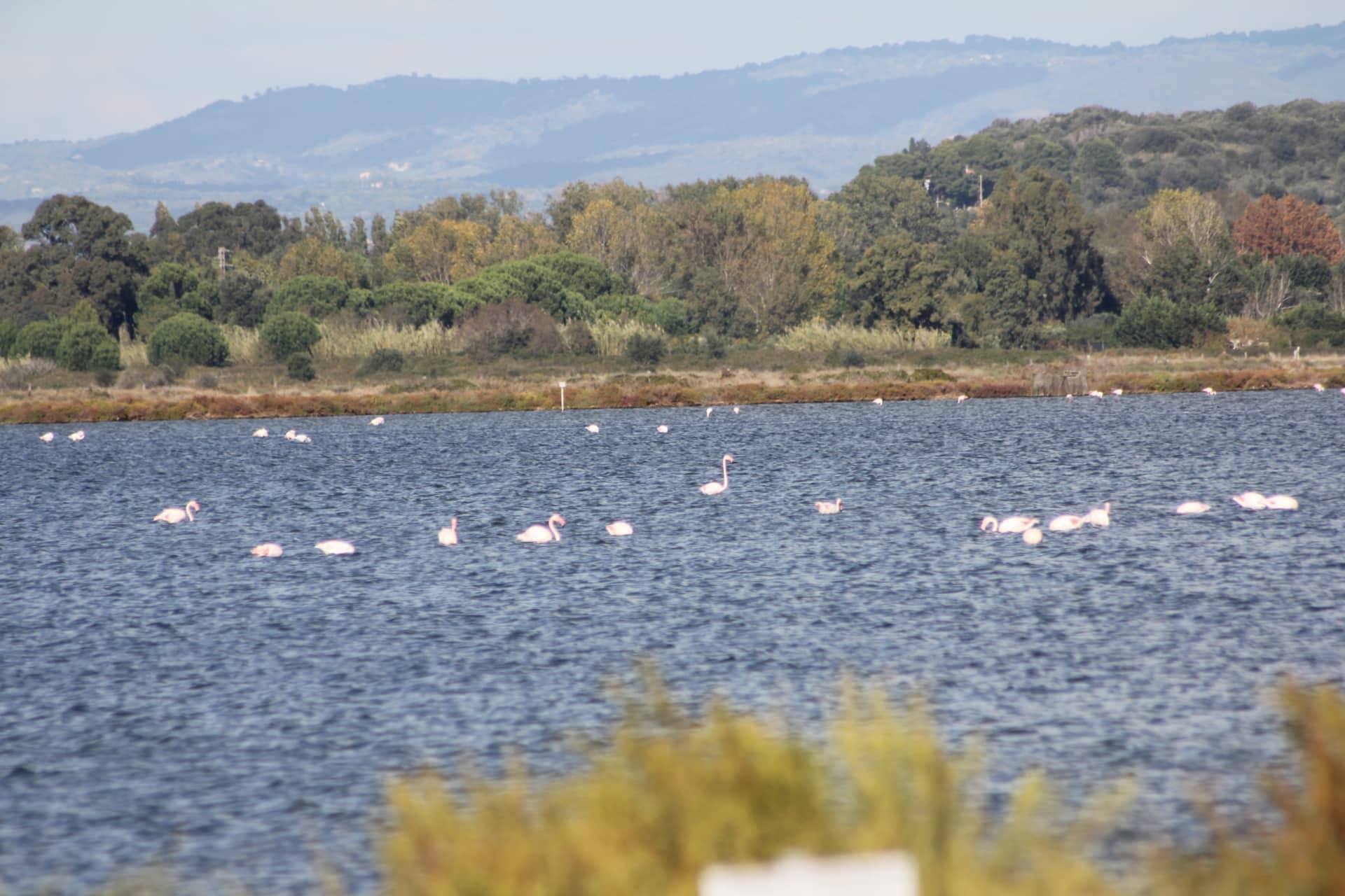 Orbetello: fenicotteri in laguna