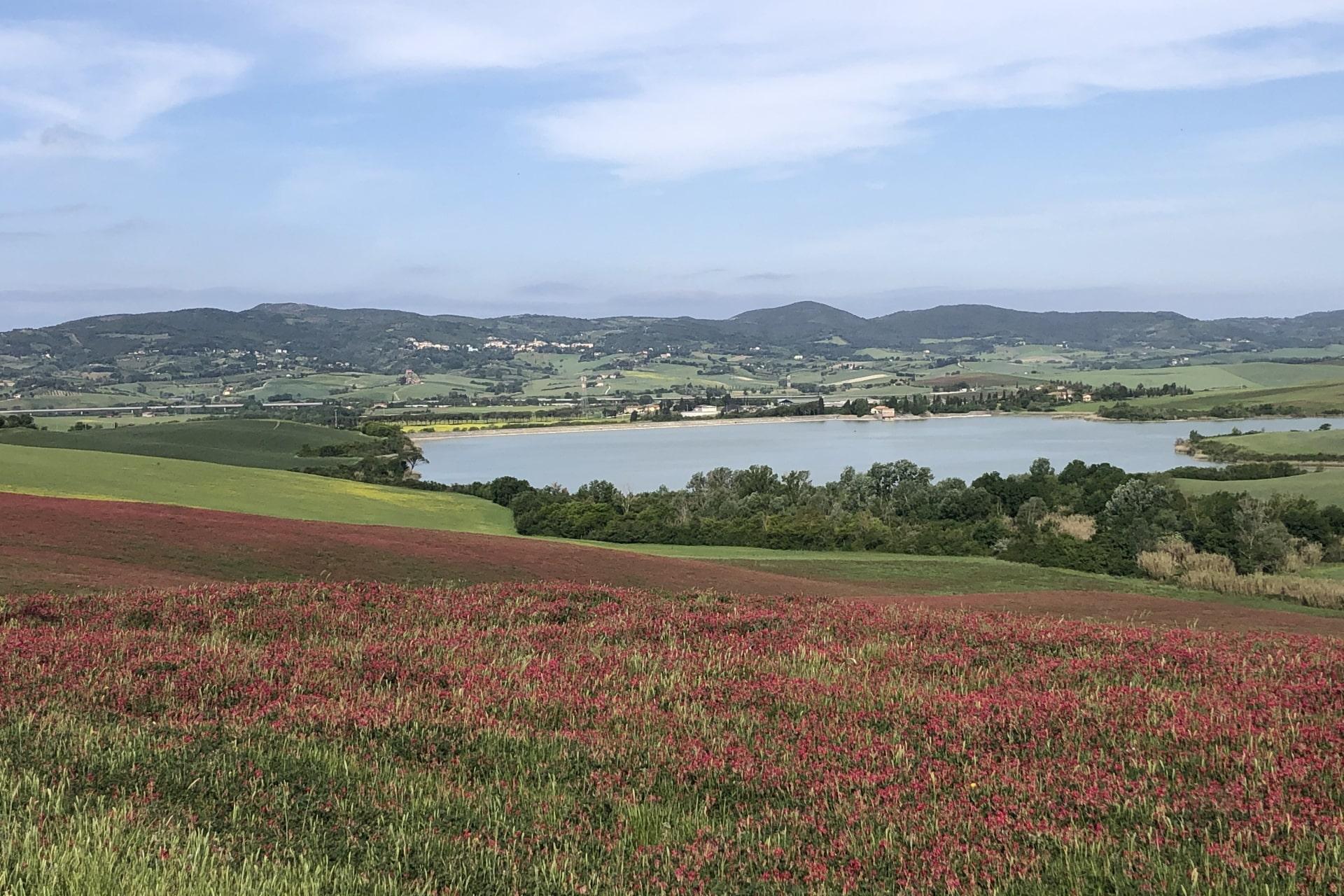 Lago di Santa Luce con campi coltivati a Sulla in primo piano