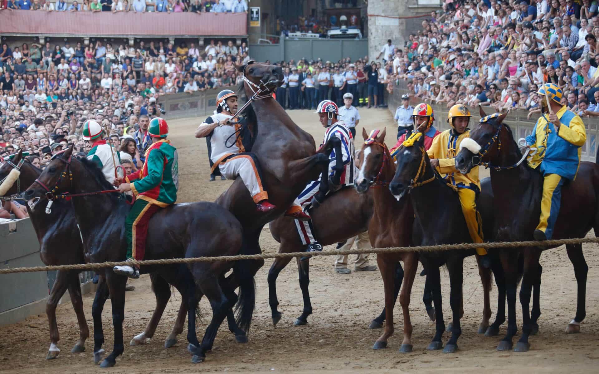Palio del 2016: cavalli ala canapo