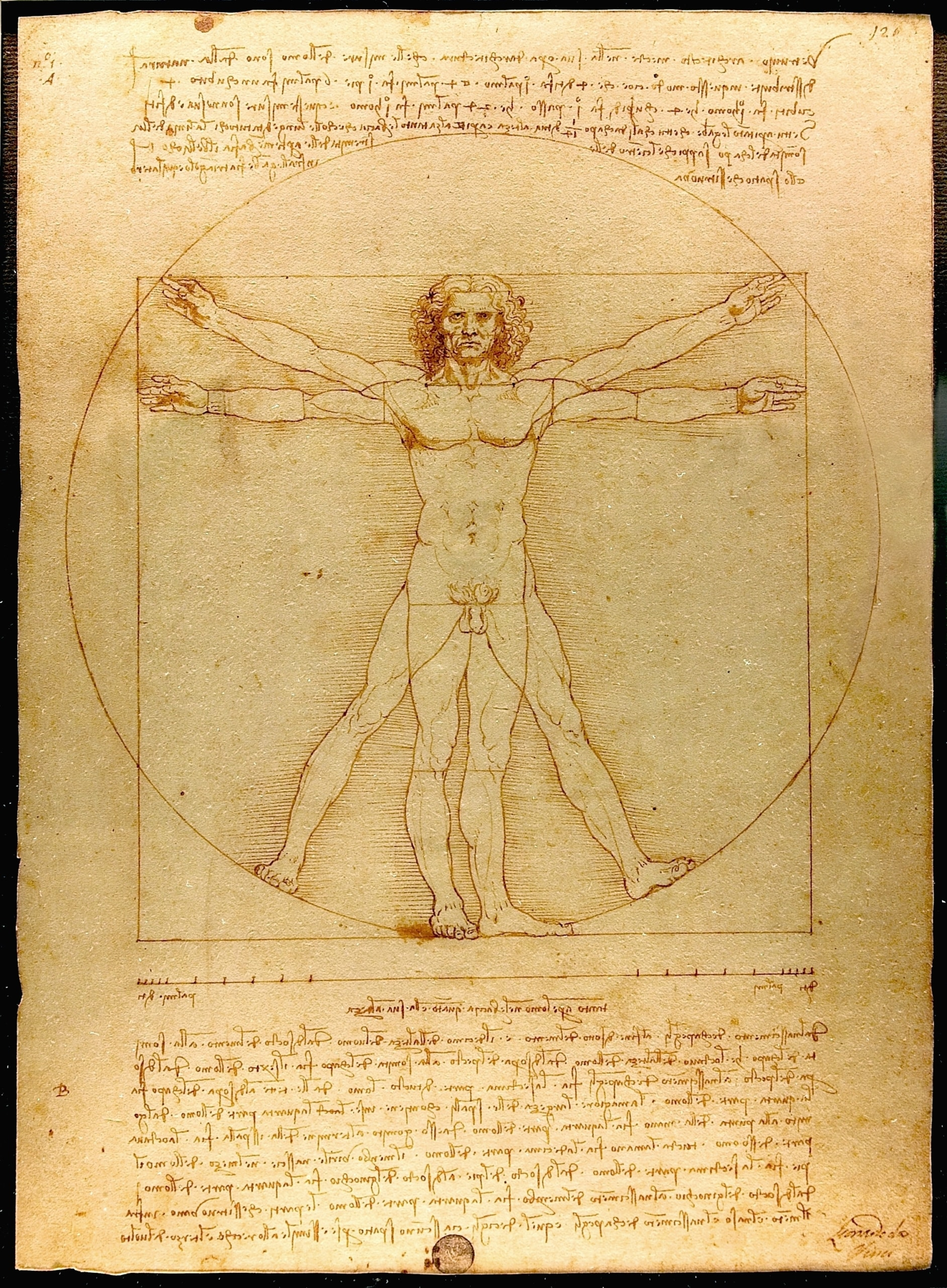 Uomo Vitruviano. Venezia, Galleria dell'Accademia